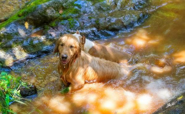 Um dia de cão Unahy - Foto Vanessa Sallesaro