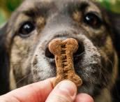Biscoitos para cães empresa Matilha Natureba