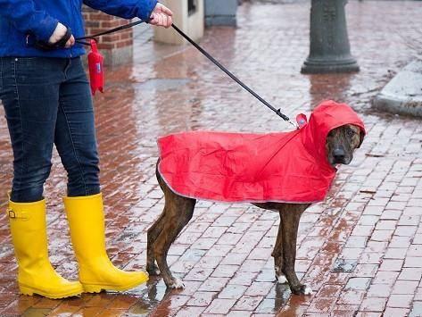 cachorro chuva