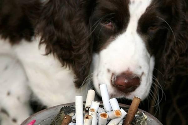 cachorro e cigarro