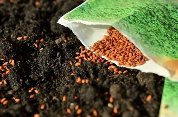 jardim semente congerdesign pixabay