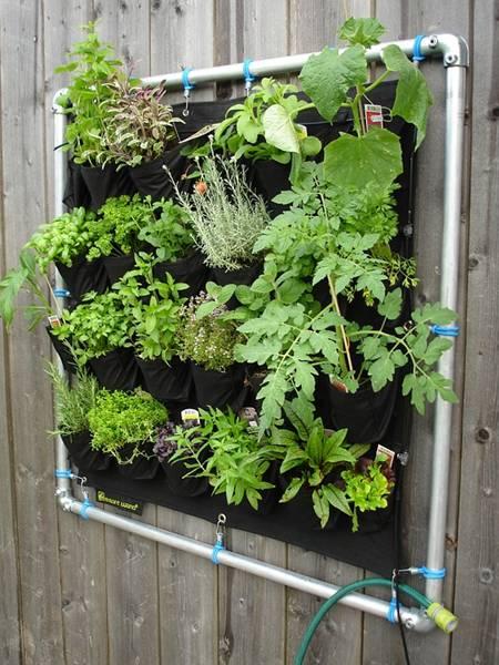 jardim vertical ervas sirgreen pixabay