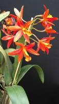 orquidea 3