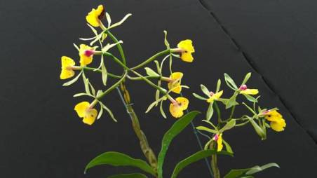 orquidea 4