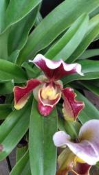 orquidea 5