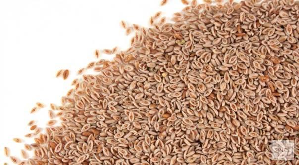 semente de psyllium