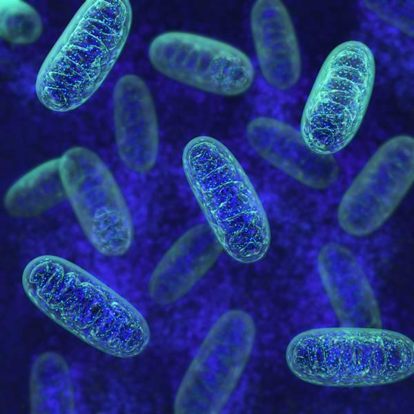 shutterstock células ciencia tratamento