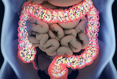493ss_thinkstock_rf_gut_microbiome (1)