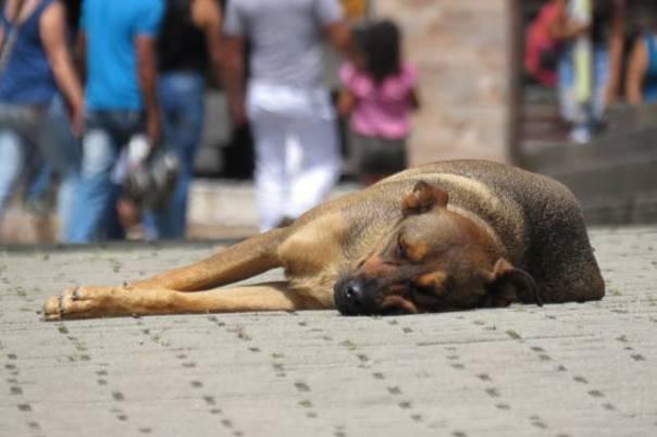 cachorro abandonado na rua