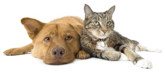 cachorro e gato.png