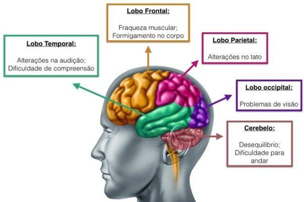 cérebro desenho
