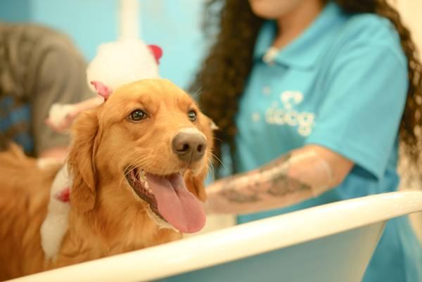 docg banho cachorro