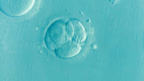 embrião3 - pixabay.png
