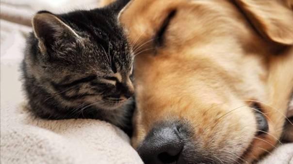 gato e cachorro adoção3