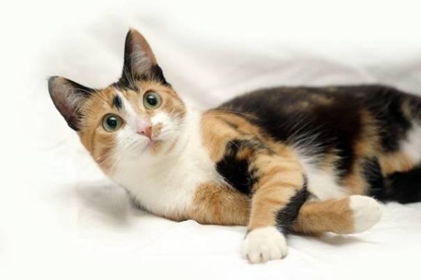 gato gata adoção.jpg