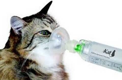gato inalação