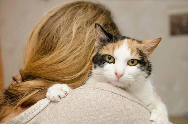 mulher com gato gata pixabay