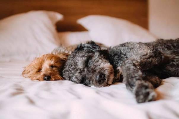 pets_frio2 cachorros na cama