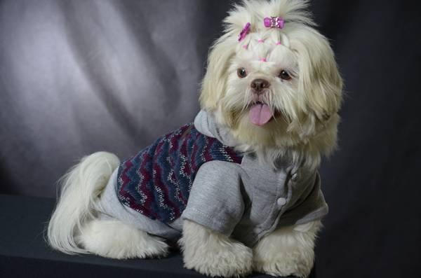 Petz coleção casaco Bonito pra Cachorro