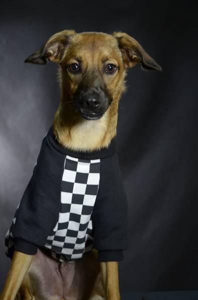 Petz coleção casaco moletom xadrez cachorro