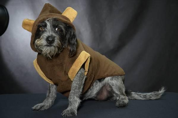 Petz coleção Puppy Pickorruchos
