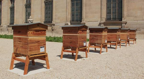 abelhas2