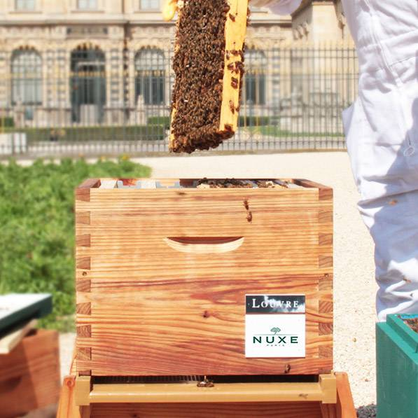 abelhas3