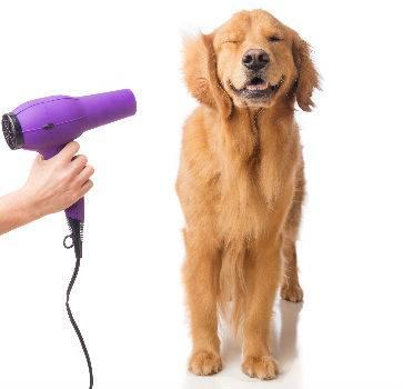cachorro banho secador doggroomingnottingham