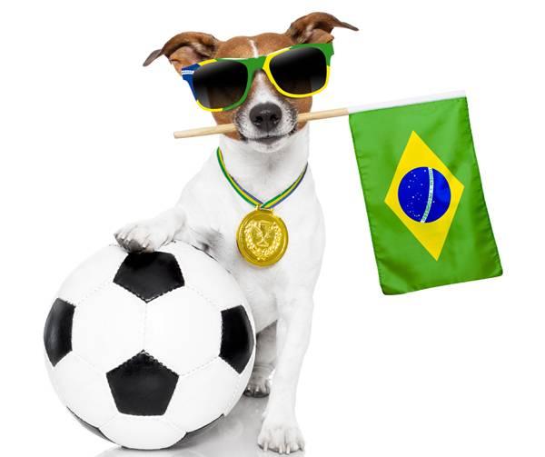 cachorro copa torcida bandeira.jpg