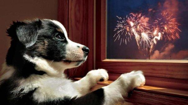 cachorro e fogos