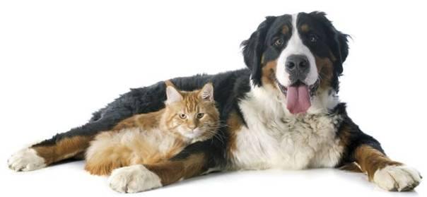 cachorro e gato deitados.jpg