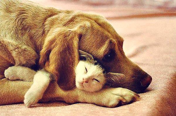 cachorro gato cama.jpg