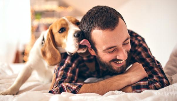 cachorro homem beagle