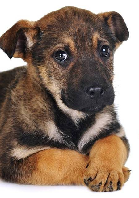 cachorro leishmanione virbac.jpg