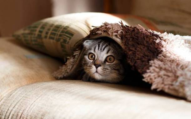 gato frio cobertor