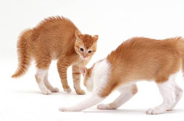 gatos brigando warren