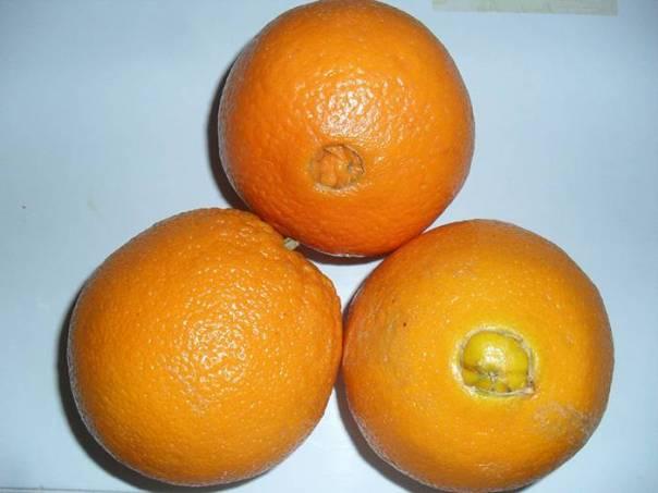 laranja 3