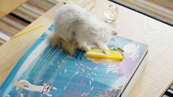O Gato Mais Curioso do Mundo_2