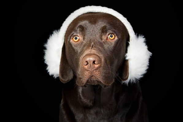 shutterstock cachorro protetor orelha