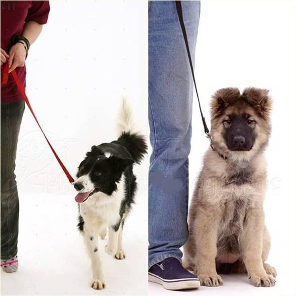 adestrando cachorros