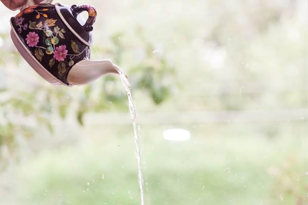 bule chá agua pixabay