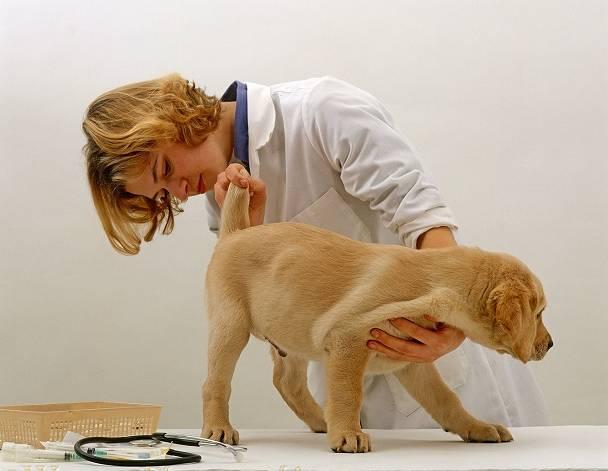 cachorro no veterinario warren