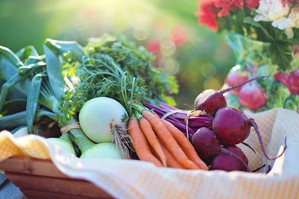 organicos legumes