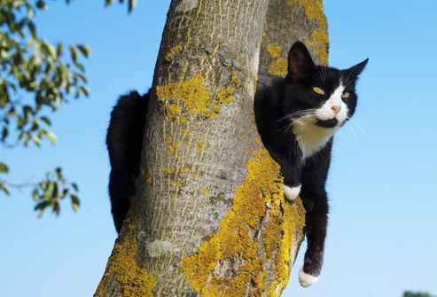 photolibrary_rm_photo_of_cat_in_a_tree