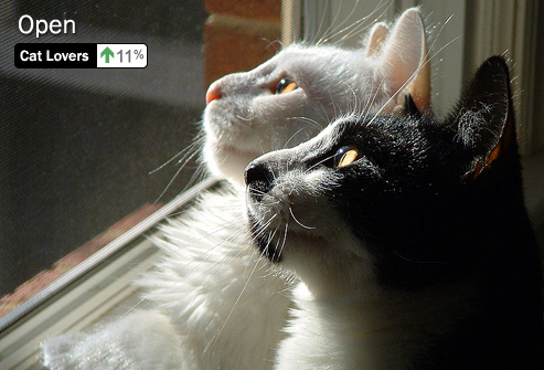 photolibrary_rm_photo_of_cats_looking_out_window