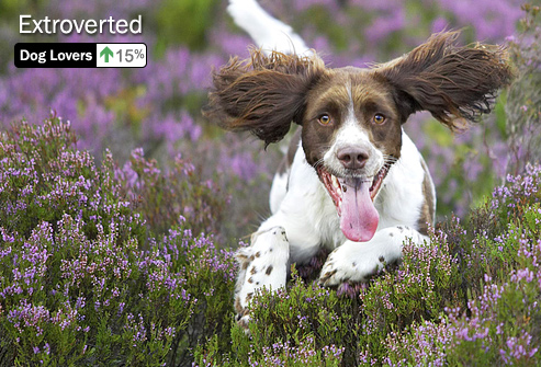 photolibrary_rm_photo_of_spaniel_running