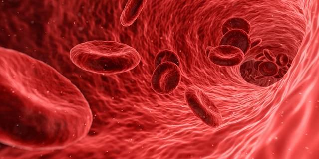 sangue - qimono pixabay