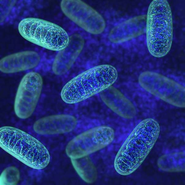 shutterstock células.jpg