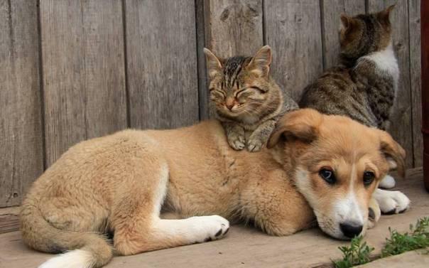 cachorro e gatos amizade