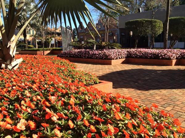 Cerca de 350 mudas de rosas formam o Jardim da Roseira e 800 orquídeas e 340 bromélias foram colocadas nas árvores próximas aos bebedouros e no Fusca.